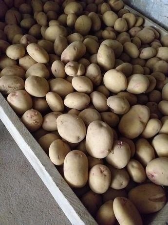Vendo batatas brancas ou vermelhas