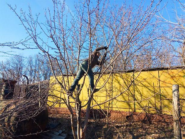 Осенняя ОБРЕЗКА деревьев. Обрезка сада САДОВНИК, Обработка препаратам