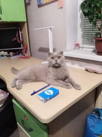 Вязка  Кошка ищет кота