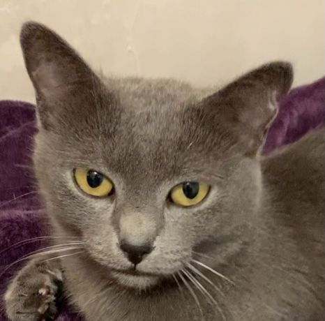 Бесплатно кошечка Кити голубая рус
