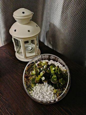 Rośliny na prezent
