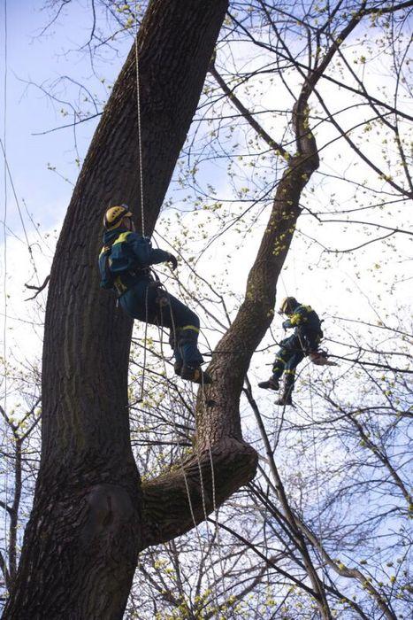 НЕдорого!!!Быстро и Качественно спилим любое дерево. Запорожье - изображение 1