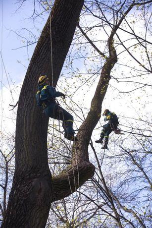 НЕдорого!!!Быстро и Качественно спилим любое дерево.
