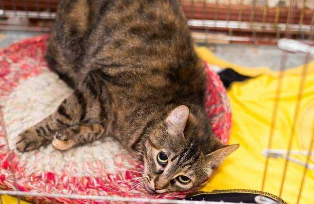 Замечательная кошечка Маняша в поисках любящей семьи и дома!