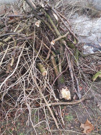 Oddam drewno na podpałkę/ognisko