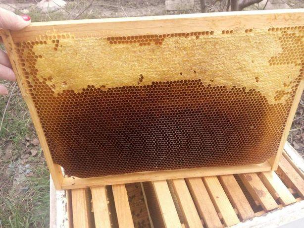 Сушь, медовые рамки