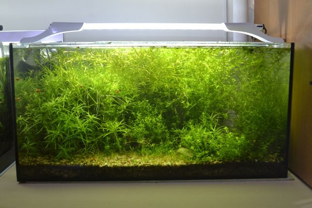 Rośliny do akwarium od Tyrrila.