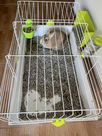 Coelha femea com gaiola.