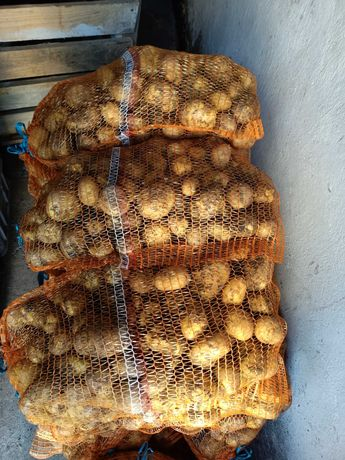 Ziemniaki młode, smaczne, workowane