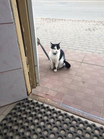 Кішка в добрі руки. Живе на вулиці
