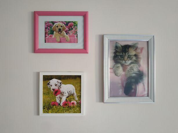 Obrazki, psy, kot, pokój dziewczynki