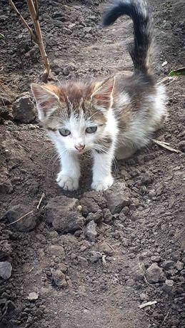 Котёнок, девочка в добрые руки