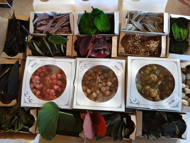 Kwiaty i rośliny stabilizowane -nowe niższe ceny