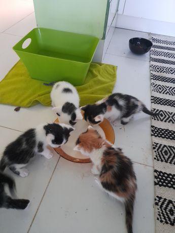 Maleńkie śliczne kotki