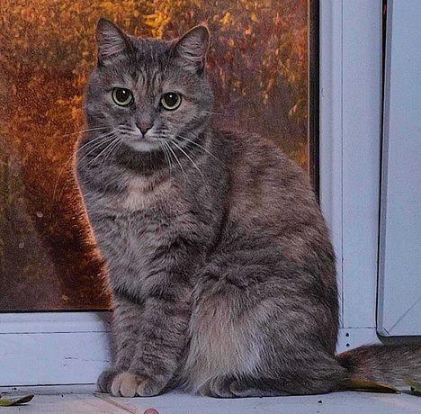Пропала кошка Ильичевский Район Семашко