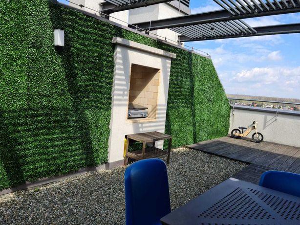 -60% bukszpan maty, ogród wertykalny, zielona ściana, żywopłot taras