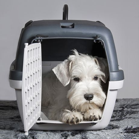Klatka transporter dla psa kota GULLIVER 1 48x32x31 2 KOLORY !!!