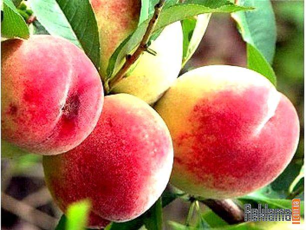 Саженцы плодовых декоративных растений,яблоня,груша,розы