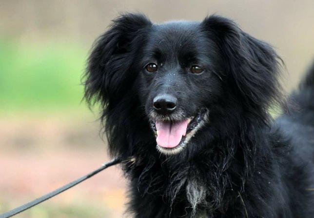 Pies do adopcji Kajtek