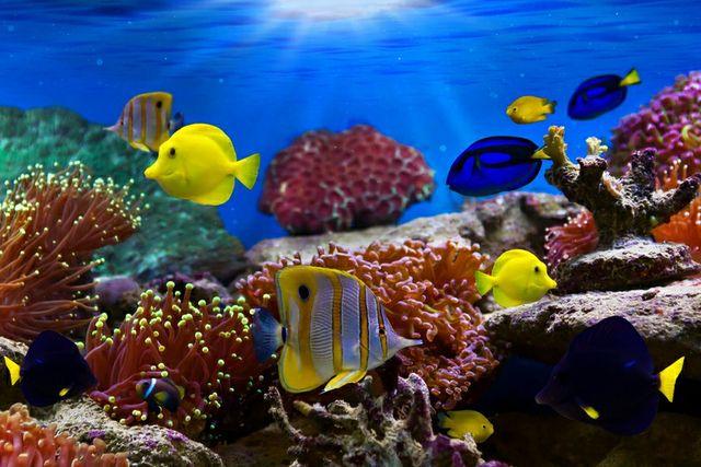 Чистка и обслуживание аквариумов!!!