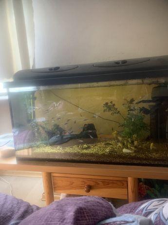 Dwa akwariumy duże wyposażone