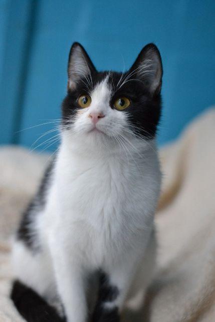 молоденька кішечка в чорно-білій сукенці 7м