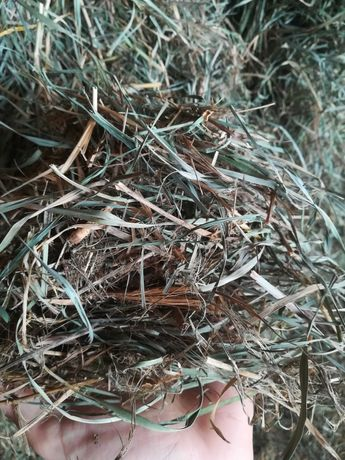 Siano z trawy kupkówki
