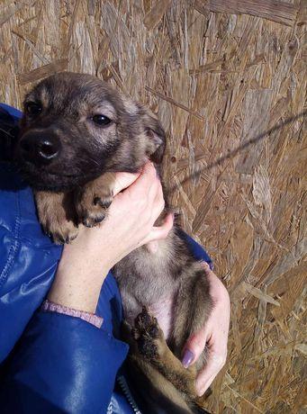 Щенок/собака до 15 кг