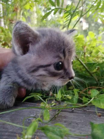 Кошечки срочно ищут дом