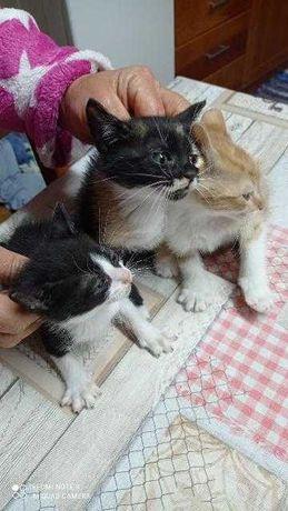 Gatinhos bebés para dar