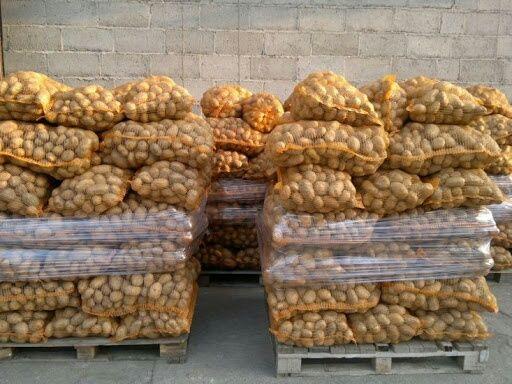 Ziemniak Denar 10zł