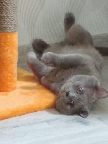 В'язка кота