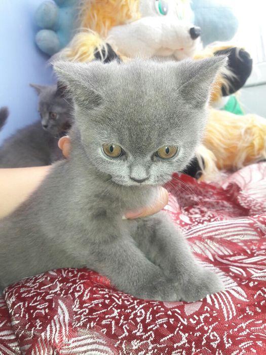 Продам котят срочно Кривое Озеро - изображение 1