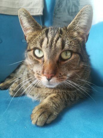 Kot szuka dobrego domu