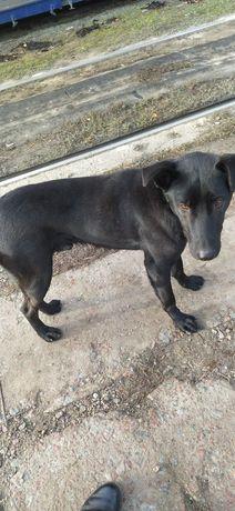 Хозяин найдись, потерялся черный собакен