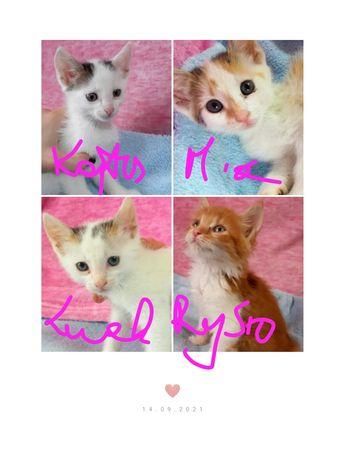 DAJ SZANSĘ! KOT KOTKA Małe Kociaki poszukują Miłości!