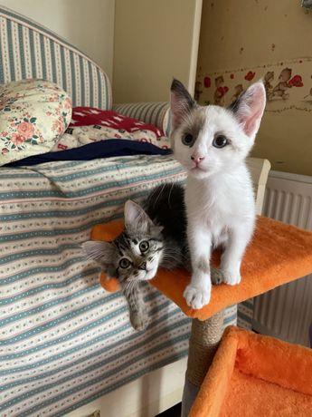 Котята ищет дом