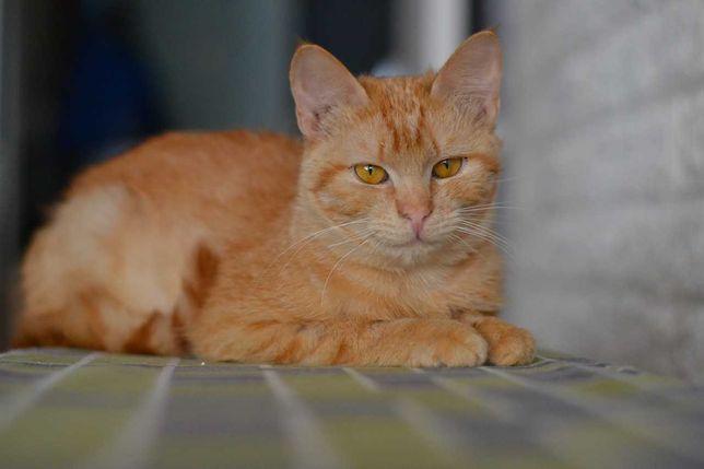 кішечка яка дуже любить муркотіти 9м