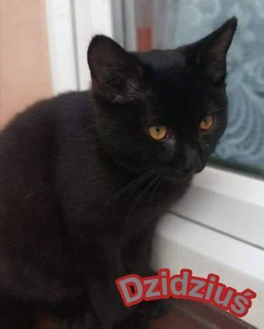 Czarny koci Dzidziuś