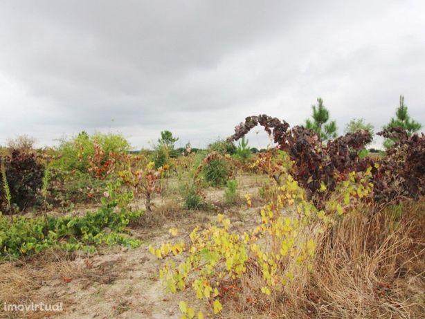 Terreno rústico situado na Herdade das Piçarras com área ...
