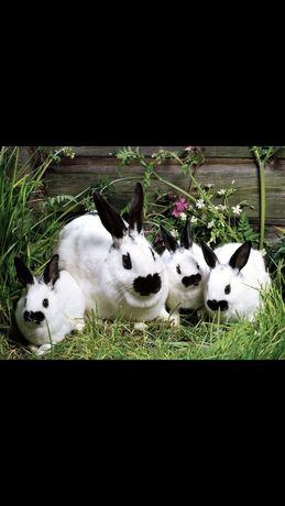 Продаж домашніх кроликів