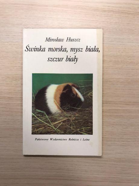 Świnka morska, mysz biała, szczur biały poradnik jak się opiekować