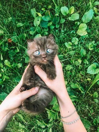 Продається кошеня