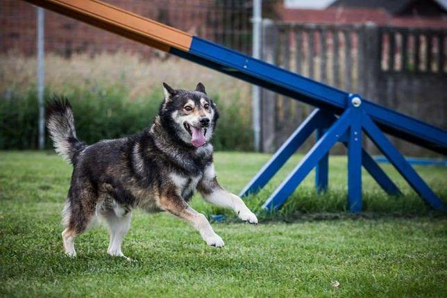 Aktywny pies samiec młody zdrowy kastrat adopcja czytaj opis