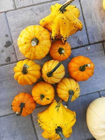 Dynia kolory jesieni