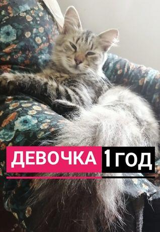 Кошка в добрые руки, кот