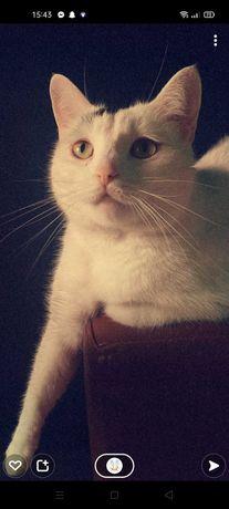 Witam mam do oddania kocice