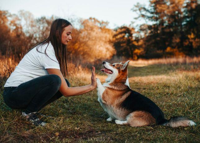 Szkolenia psów, behawiorysta zwierząt