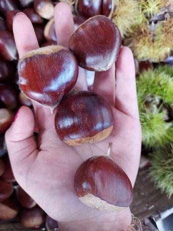 Vendo castanhas em Vila Verde