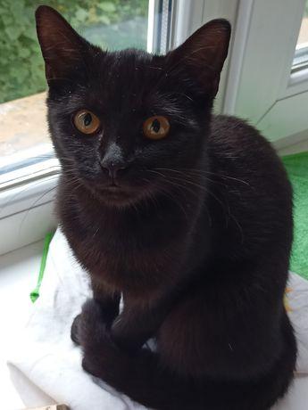Kotka czarna szuka domu